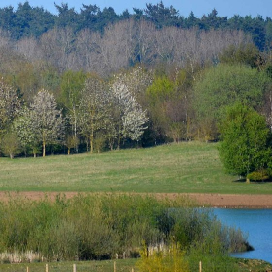 St Genevieve's Lake Suffolk